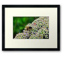 Bee Nice Framed Print