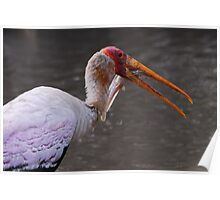 Zambia - Yellow-billed stork Poster