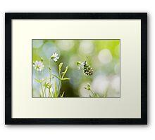 Spring Arrivals Framed Print