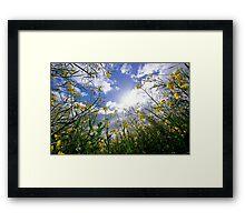 Skywards Framed Print