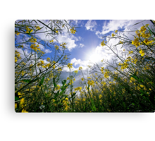Skywards Canvas Print