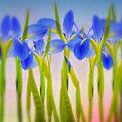 Louisiana Irises  by Bonnie T.  Barry