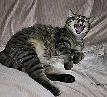 Big Yawn by Heather King