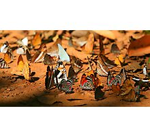 Butterfly Menagerie  Photographic Print