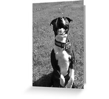 Boo- The Family Dog Greeting Card