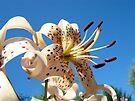 Lily Flowers Floral Garden Blue Sky Baslee Troutman by BasleeArtPrints