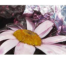 daisy in distress Photographic Print