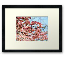 Dogwood Tree Flowering Pink Dogwood Flowers Baslee Framed Print