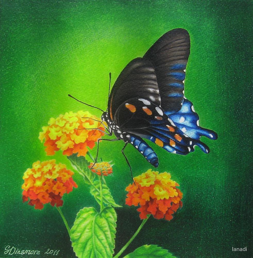 Butterfly #3 by lanadi