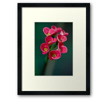 Crown of Thorns Flowers Framed Print