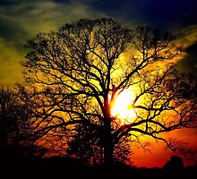 The Hope Tree by Donnie Voelker