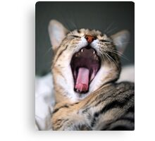 yawn! Canvas Print