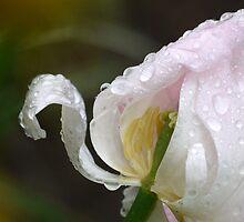 Pink Ribbon by Brian Bo Mei