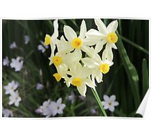 Jonquils in Spring Poster
