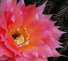 Petals & Prickles by Ron Hannah