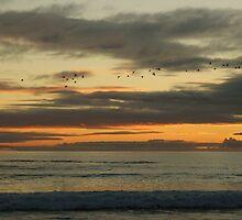 South Australian beach at Sunset by ddymock