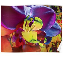 Orchid Art Collection Poster