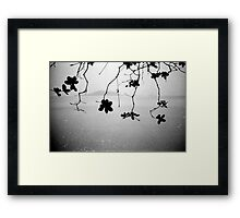 branches, kep, cambodia Framed Print