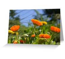 Cheerful Orange and Yellow Flowers Greeting Card