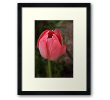 One Or the Other Framed Print
