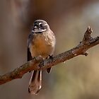 """Grey Fantail"" by Heather Thorning"
