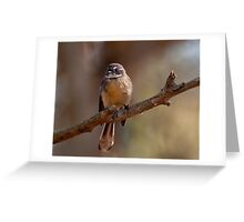 """Grey Fantail"" Greeting Card"