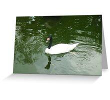 Exotic swan enjoying a relaxing swim Greeting Card