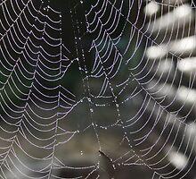 Morning dew spiderweb by Jason Dymock Photography