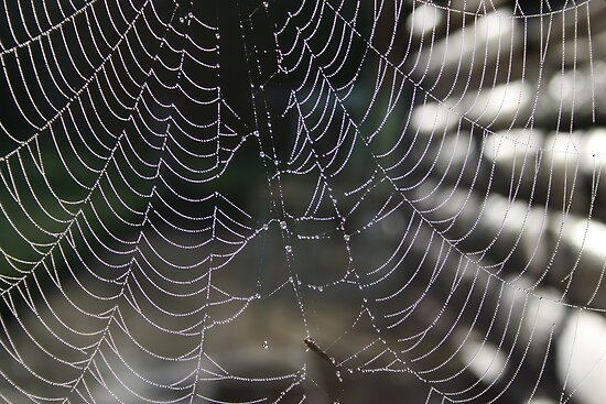Morning dew spiderweb by Jason Dymock