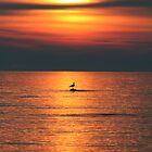 Bird in the Sunset by Jason Dymock
