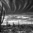 The Desert in B&W by Saija  Lehtonen