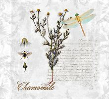 Chamomile herb Dragonfly Botanical illustration art by Glimmersmith
