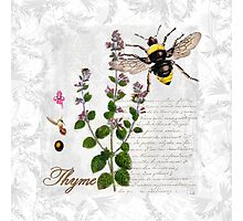 Shabby Chic Thyme herb Bumble Bee illustration art Photographic Print