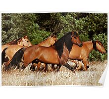 Chief and his Mares 2 Poster