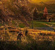 The Hill End woodchopper by Geraldine Lefoe
