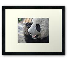 Adelaide's Panda Bear Framed Print