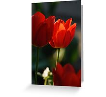 Tulip in sunshine lighting Greeting Card