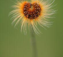 Flower Of Crawler by VladimirFloyd