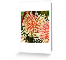 Pom poms... Greeting Card