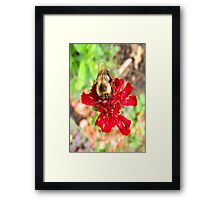 Busy Bee... ©  Framed Print