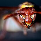 Wasp in flight by Graeme Mockler