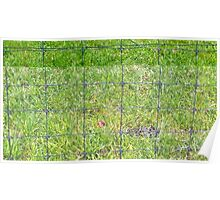 Fence and Grass Poster