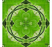Silk Photographic Print
