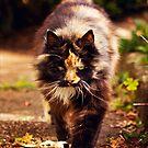 Prowling by Josie Eldred