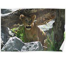 I am the lion king honest. Poster