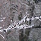 Frozen Tree by cishvilli