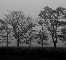 Trees in the Mist by NolsNZ