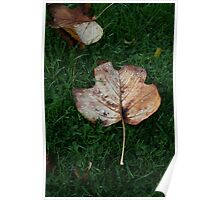 Fall of the Leaf Melancholia Poster
