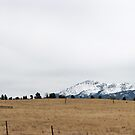 Rampart Range Pano by Matt Benson