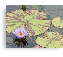 Lily pad with purple flower Canvas Print